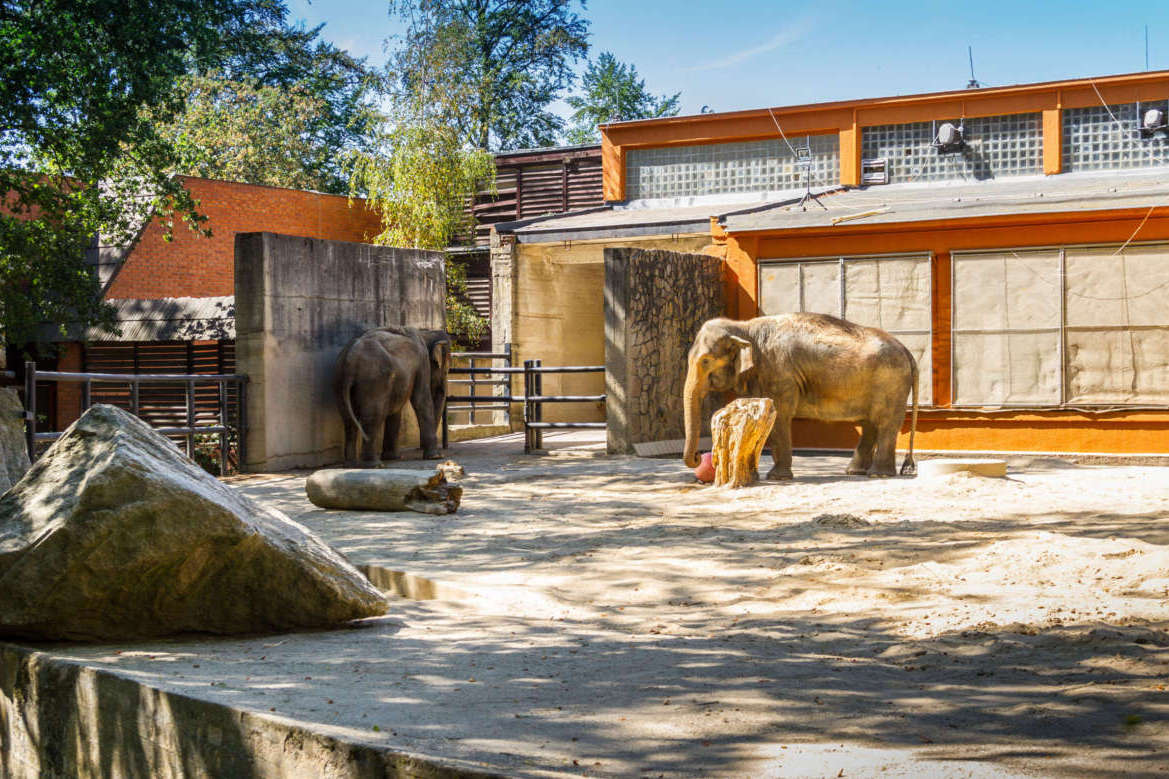 Pavilon slonů