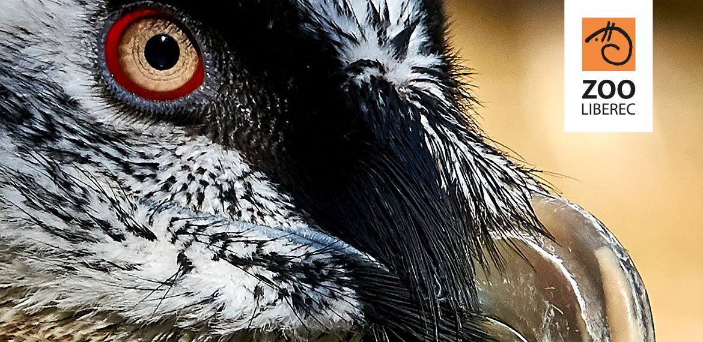 Birds of prey conservation at Liberec Zoo