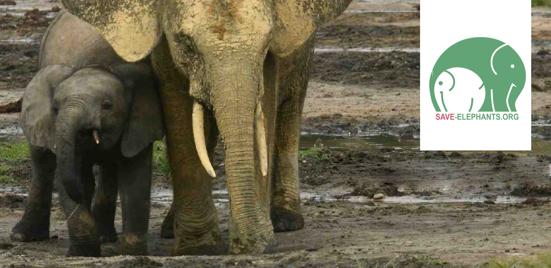 Save-Elephants.org