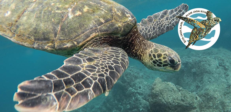 Výzkum a ochrana mořských želv v Indonésii